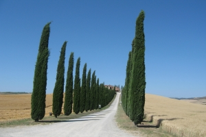 Bicycle Tour Tuscany